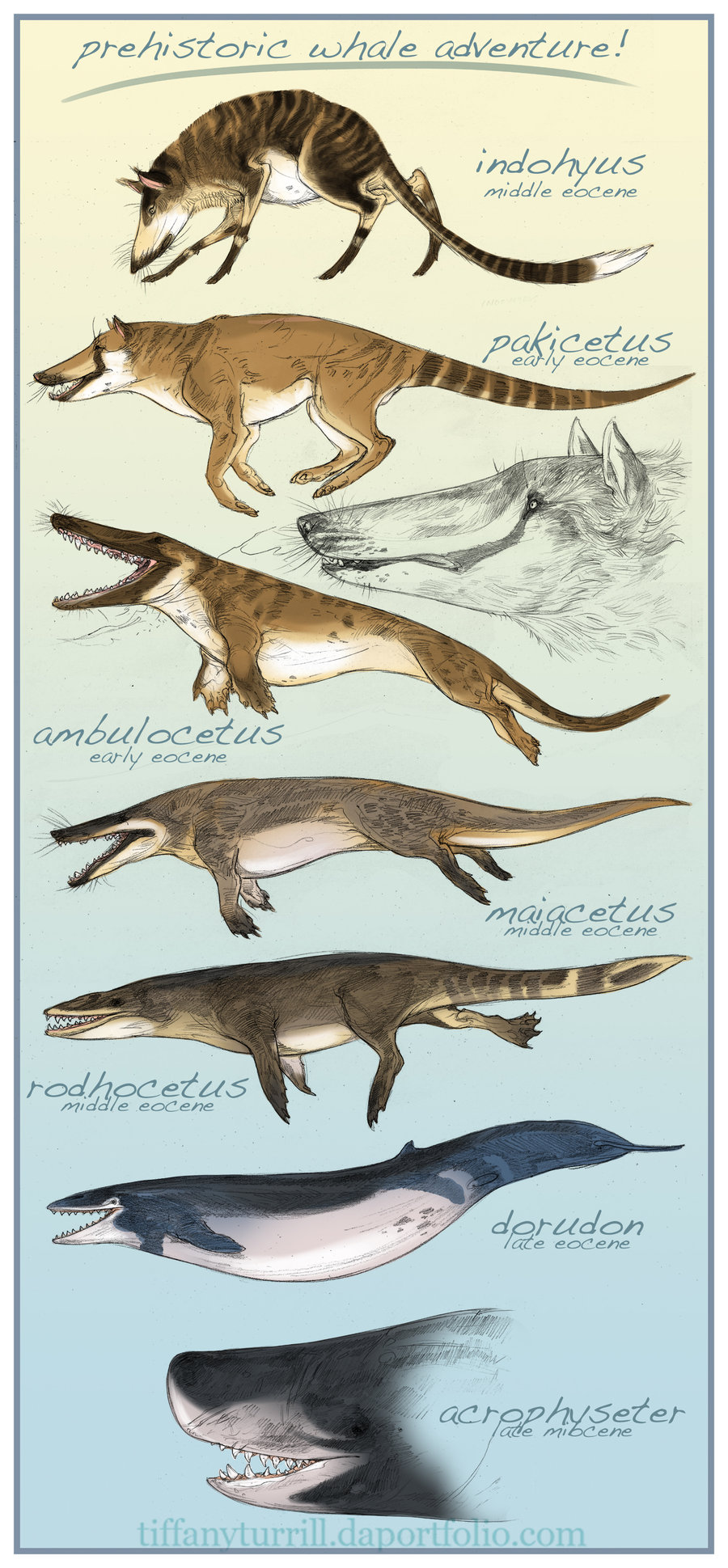 a comparison of the ancient pakicetus to the modern whale