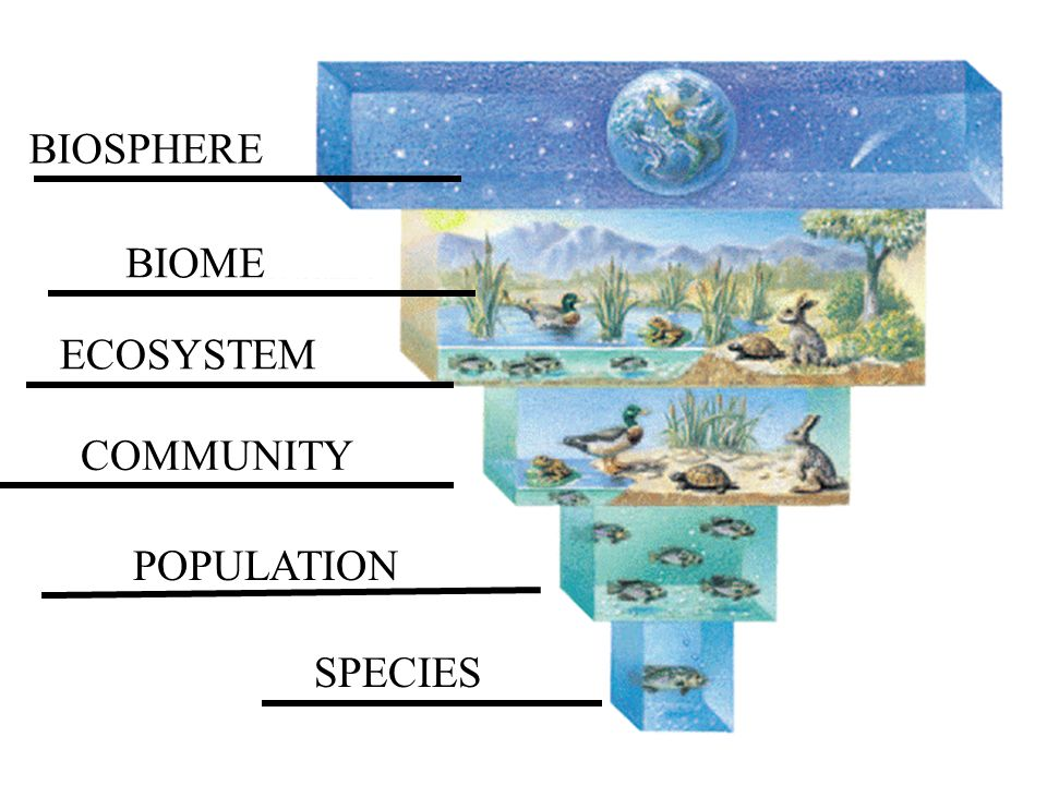 Ecology and Communities on emaze