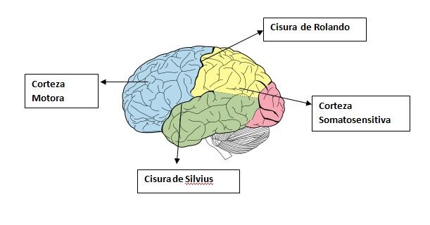 Neuropsicología del aprendizaje on emaze
