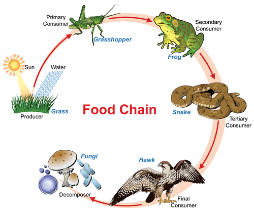an introduction to two types of organisms frogs and humans Frogs and humans share a lot of similarities in with two atria and one ventricle compared to the human's two atria and two ventricles additionally, frogs and.