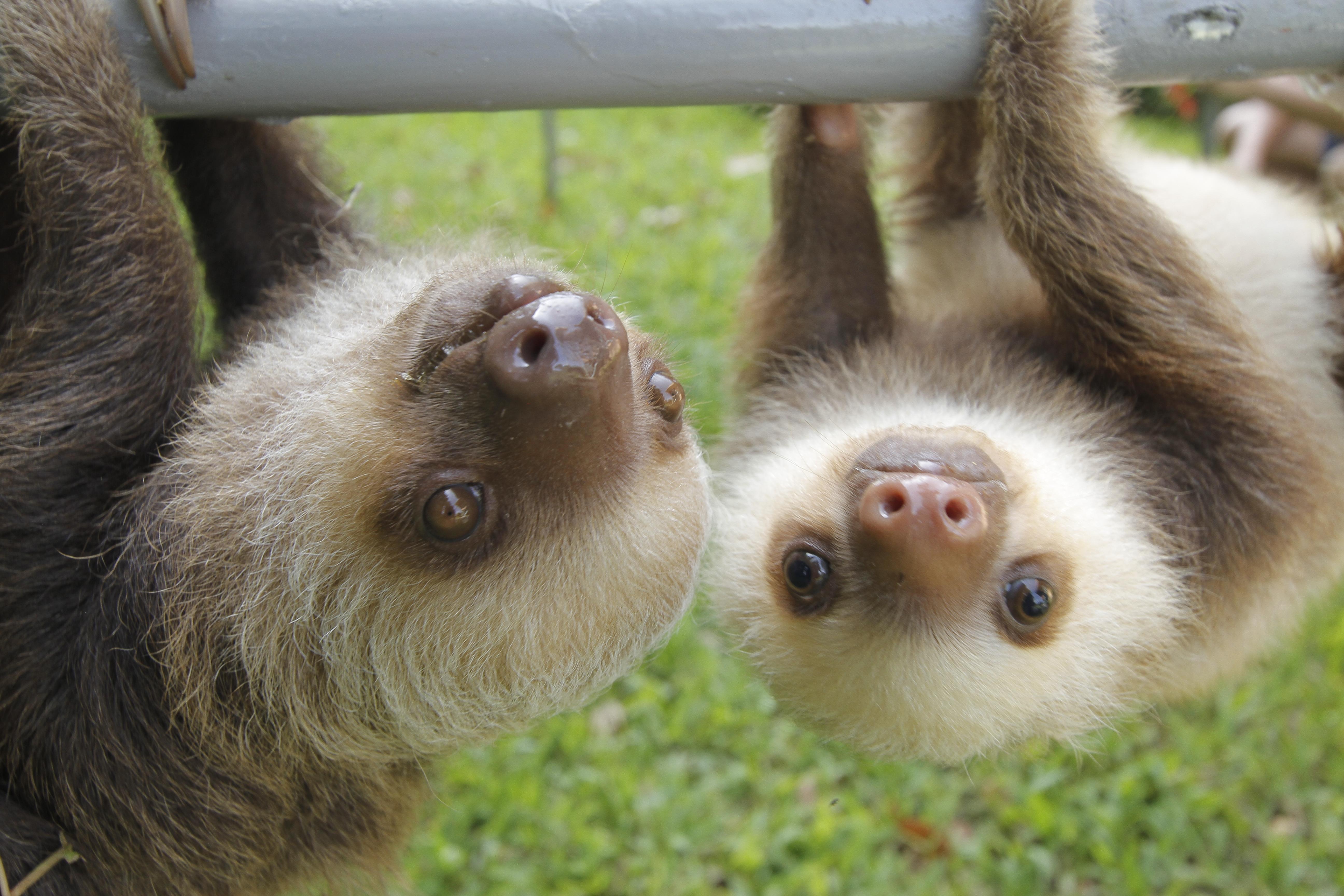 Ноты, ленивцы прикольные картинки