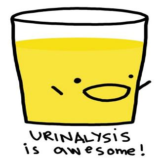Image result for urinalysis