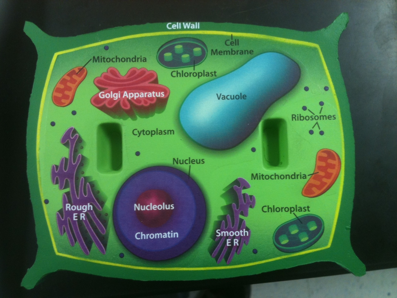 3d Plant Cell Diagram Project Best 25 Model Ideas On For Kids