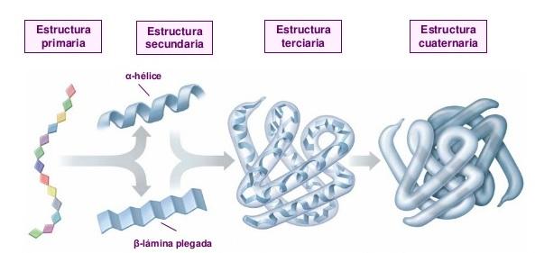 Bioquimica Proteinas