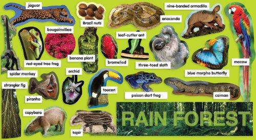 Rainforests copy1 on emaze