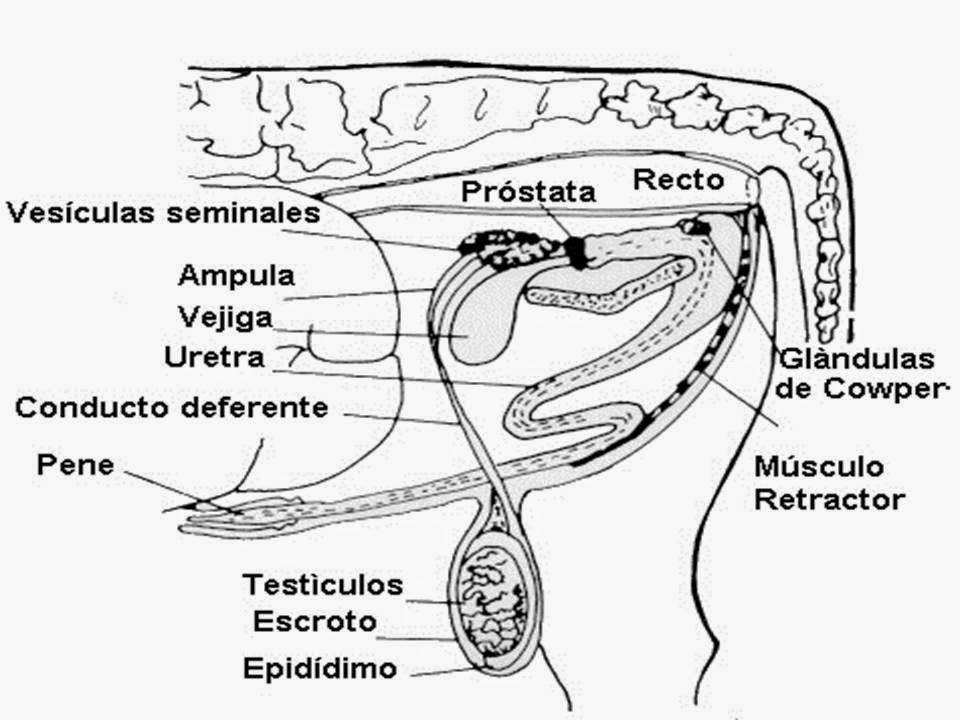 ANATOMIA Y FISIOLOGIA DEL APARATO R...