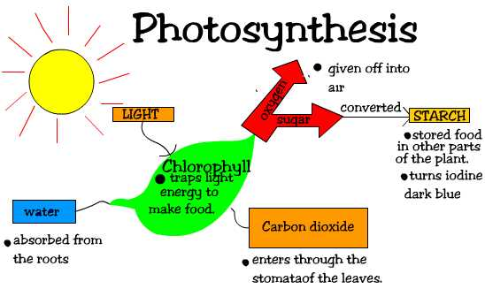 Chemosynthesis process takes place