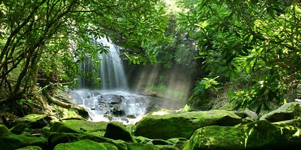 Amazon Rainforest on emaze