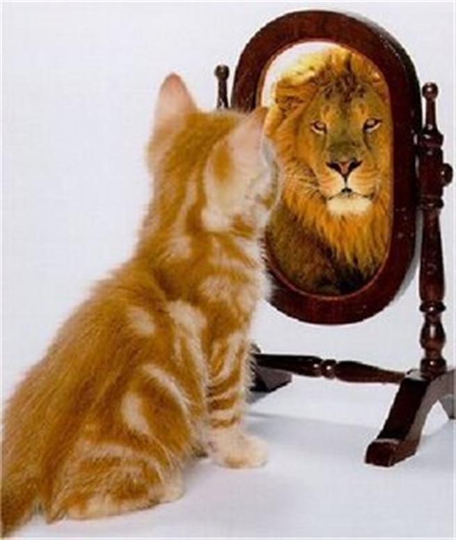 Картинки по запросу котенок видит в зеркале льва
