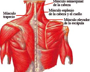 Duele los riñones cerca de la columna vertebral