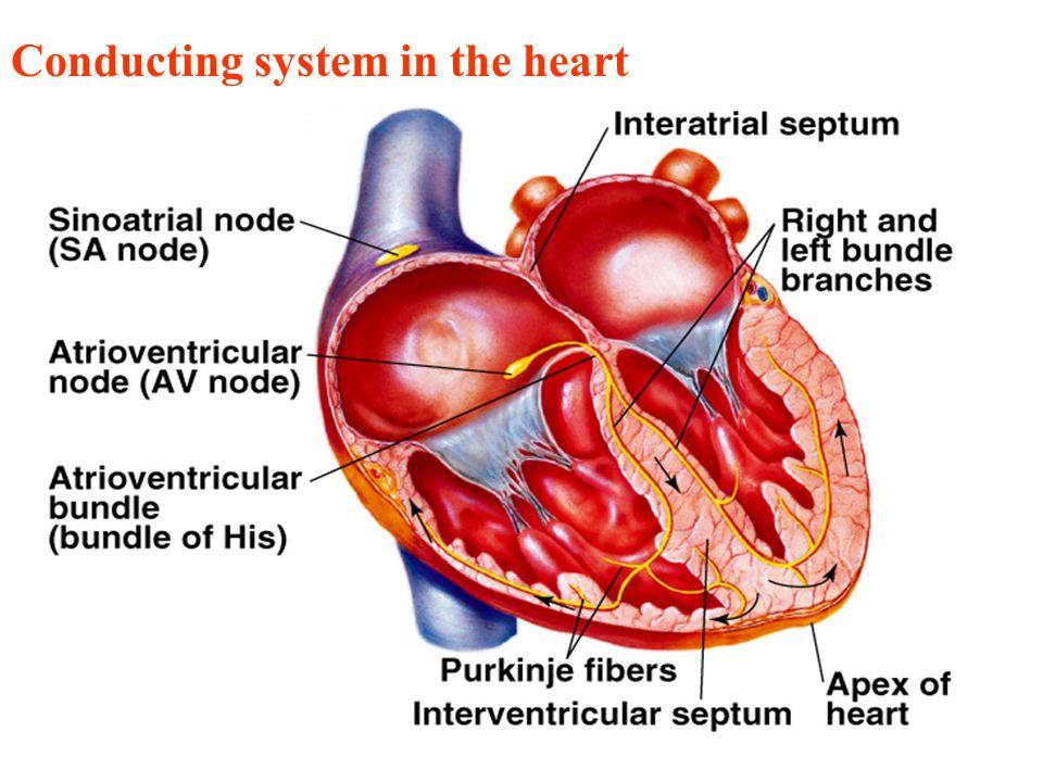 Cardiovascular: on emaze