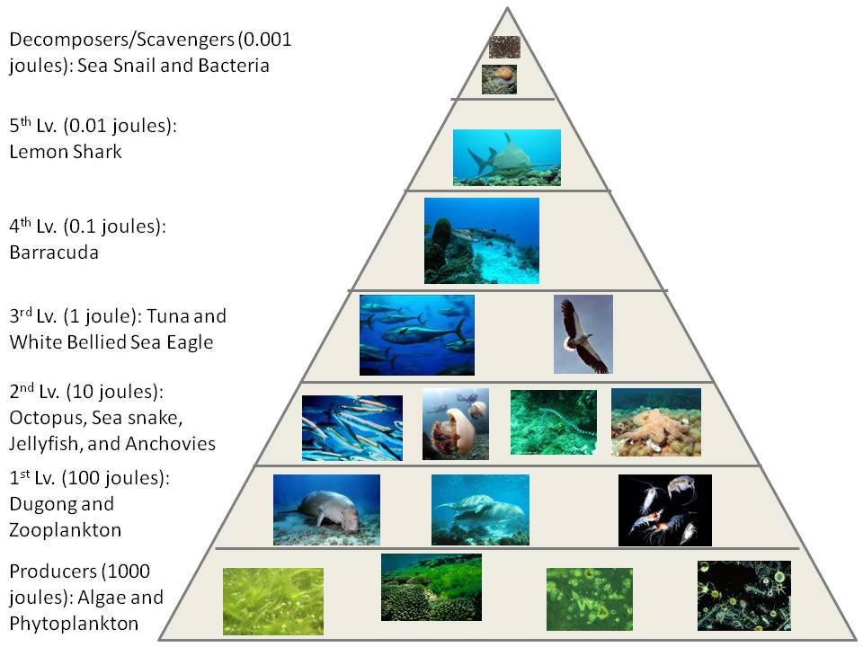 Great Indian Food Pyramid