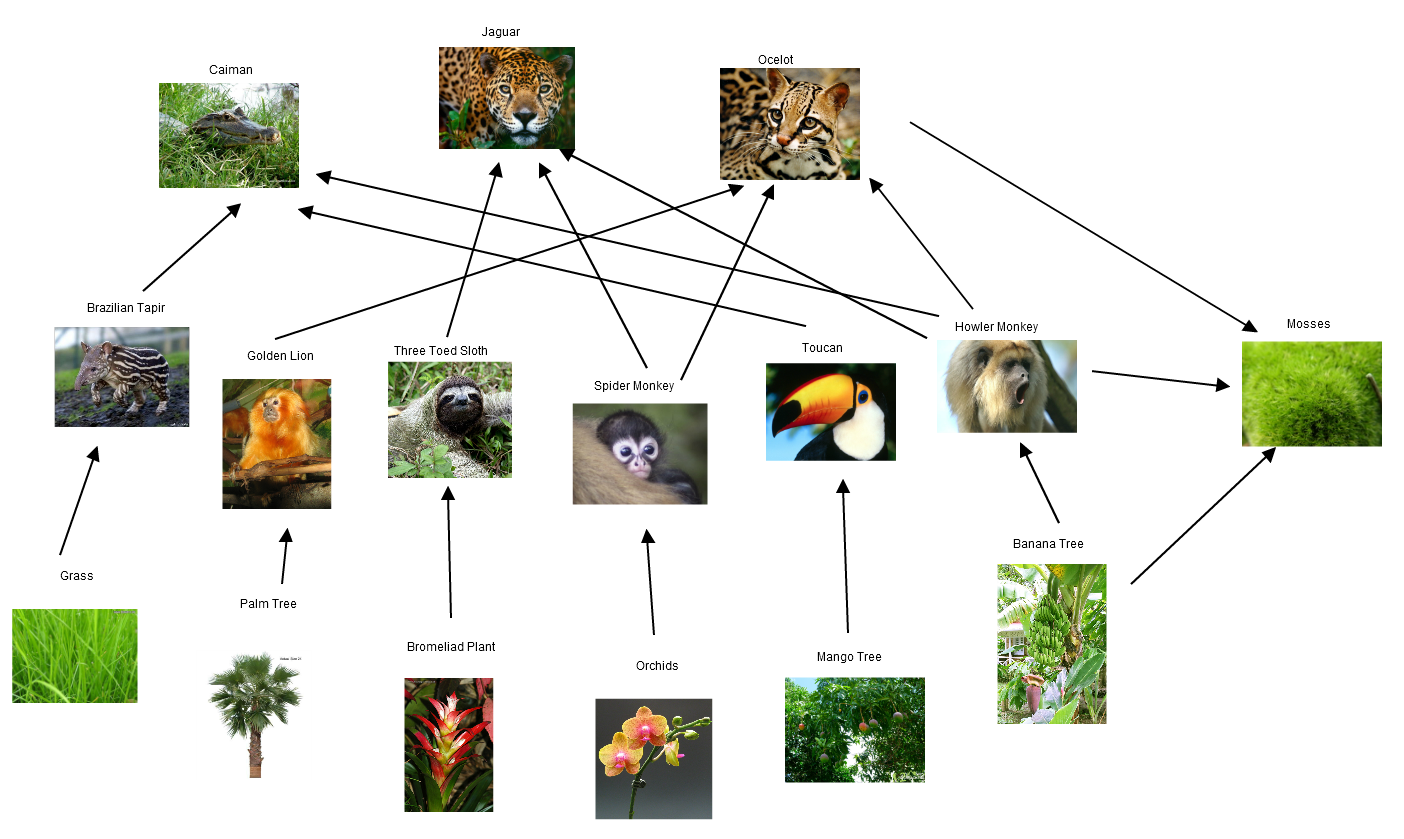 Amazon RainforestBy on emaze Rainforest Food Web