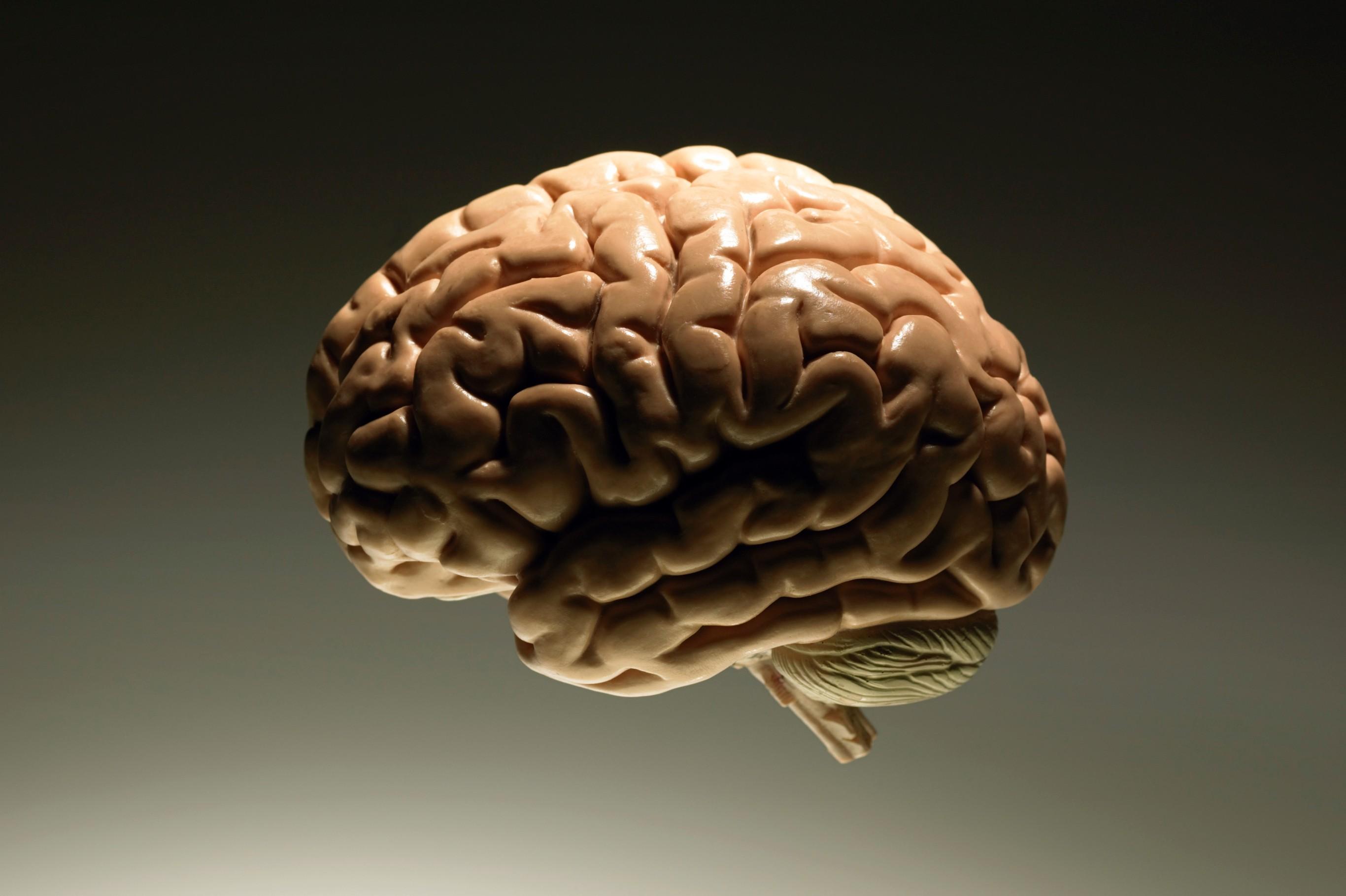Коты, приколы картинки мозг