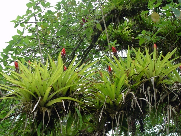 epiphyte and tree commensalism relationship