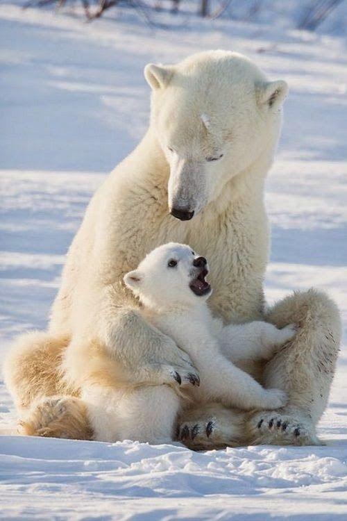 polar bears on emaze
