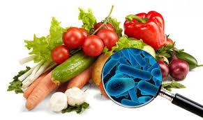 Microorganismos en los alimentos by terperojel on emaze