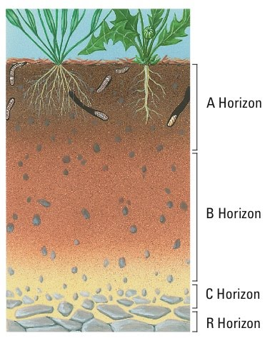 soil profile emaze on emaze