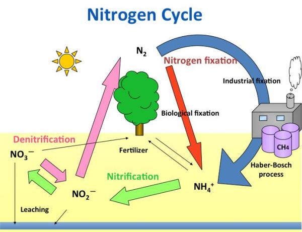 What are Nitrogen Fixing Bacteria