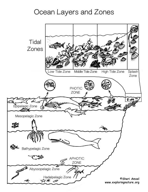 mesopelagic zone marine life copy1 on emaze