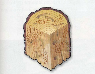 Difetti del legno infradiciamento pannelli termoisolanti for Case in legno difetti