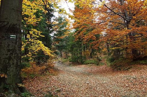 Climas on emaze for Arboles de hoja perenne para clima continental