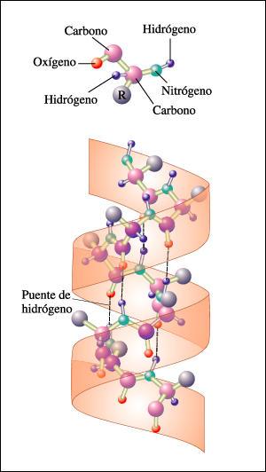 Estructura Secundaria De Las Proteinas By Alejis Espitia On