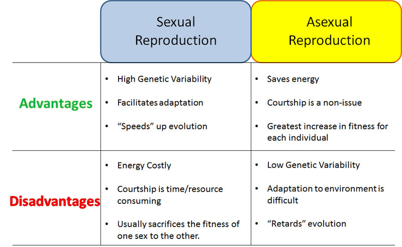 Similarities differences between asexual sexual reproduction