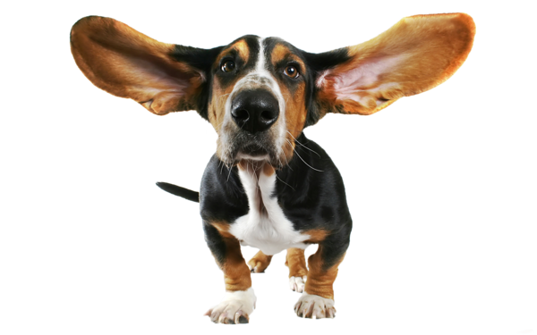 """Résultat de recherche d'images pour """"l'audition chez le chien"""""""