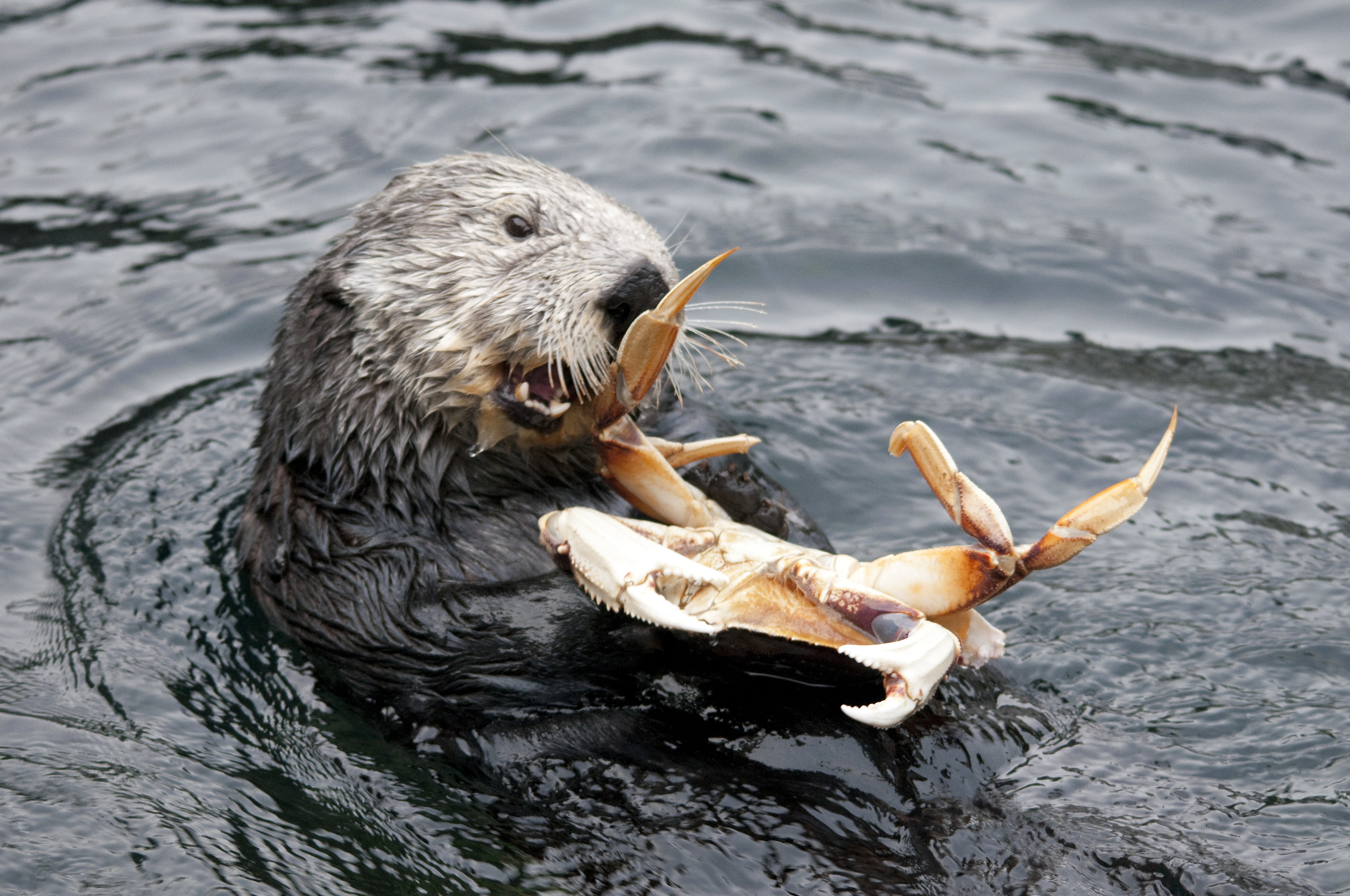 otters on emaze