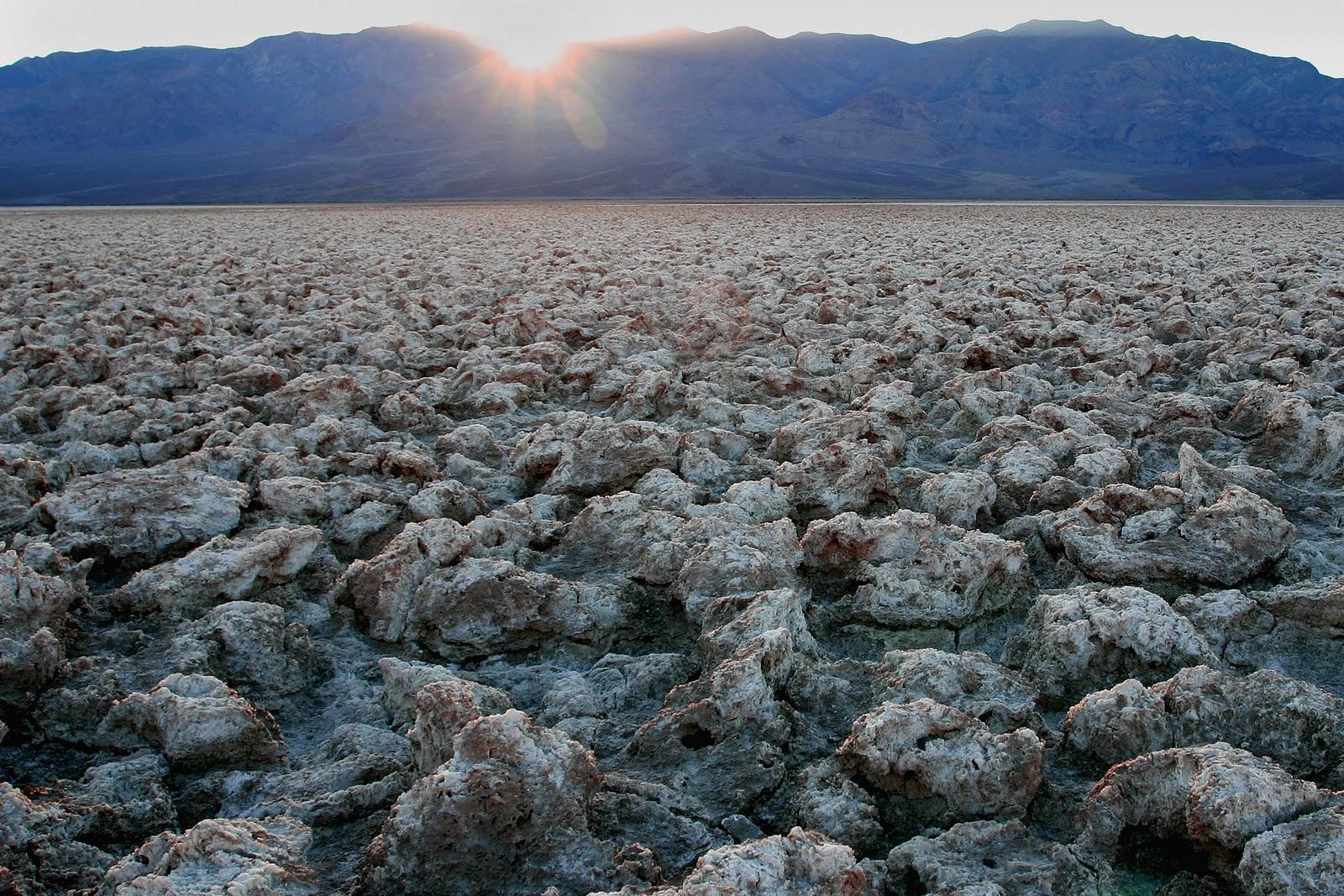 картинка арктические почвы экспонаты