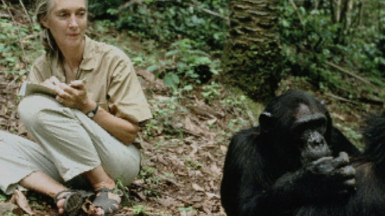 a biography of jane goodall and her achievements in science In her life, jane goodall won many prestigious awards, has written several articles, and done several documentaries with national geographic, which she won the society's centennial award she has also been awarded the kyoto prize, the woman of the year award, and the tyler prize for environmental achievement.