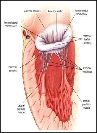 circulatory on emaze, Human Body