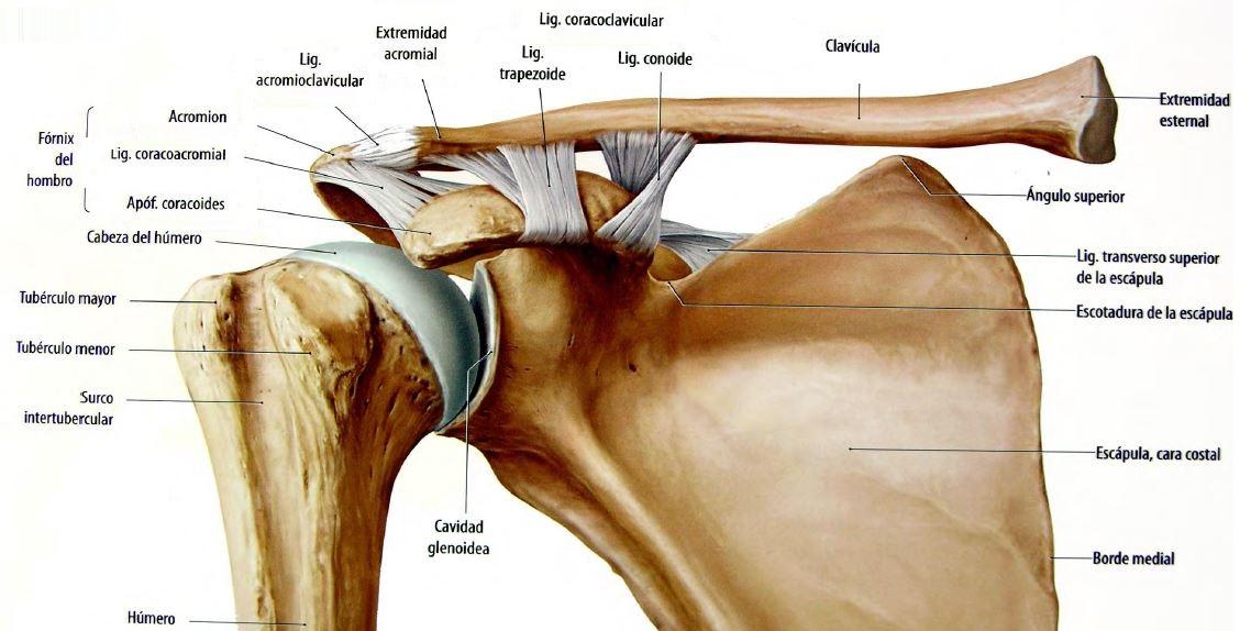 Anatomía de Articulaciones. on emaze