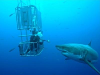 Sudafrica geografia on emaze - Bagno con gli squali sudafrica ...