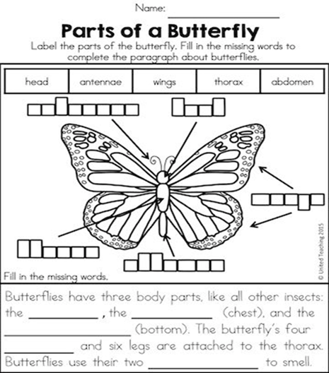 list of synonyms and antonyms of the word insect parts activity sheet. Black Bedroom Furniture Sets. Home Design Ideas