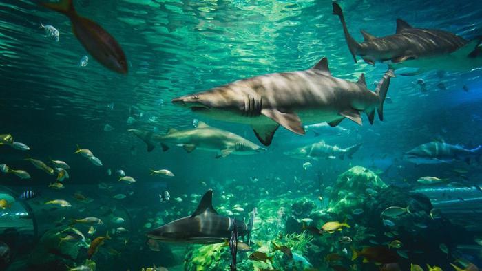 Shark Extiction on emaze