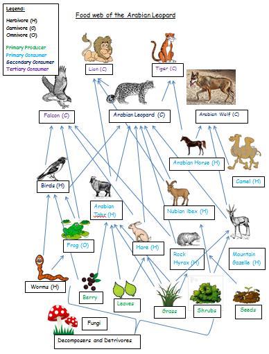 leopard food web diagram