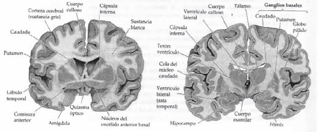Sistema Nervioso de