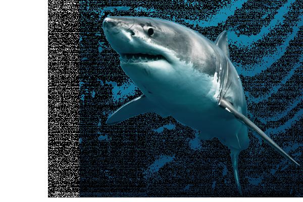 Overfishing of on emaze