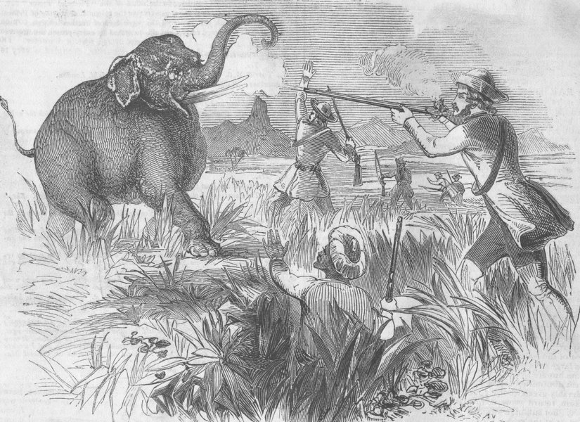 george orwell shooting an elephant thesis
