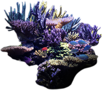 Under the Sea on emaze