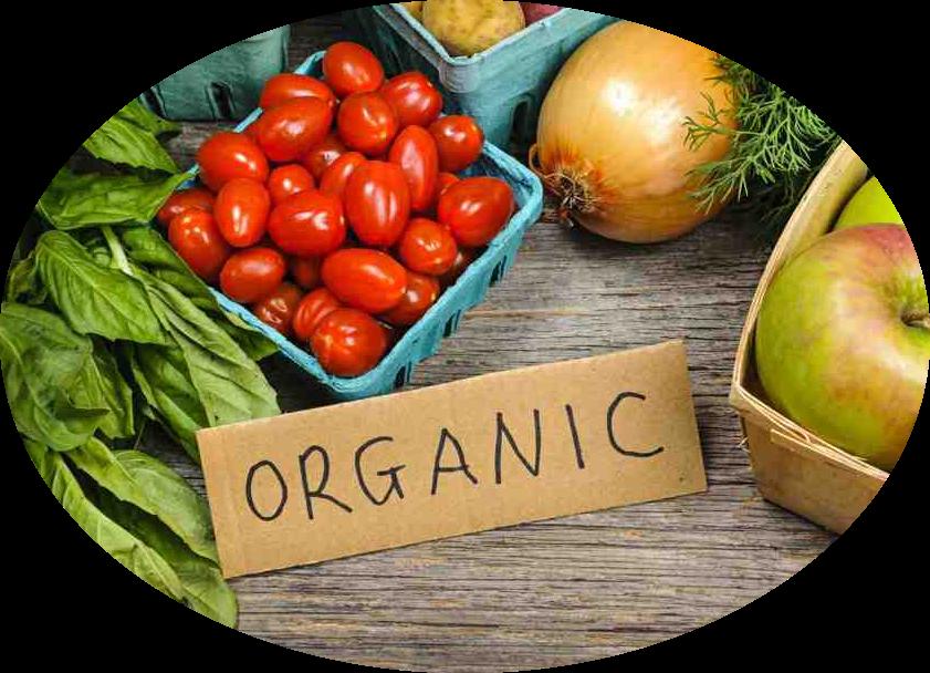 Argumentative Essay Organic Food Vs Conventional