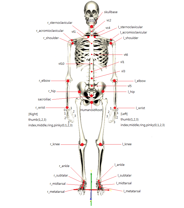 The Body System On Emaze