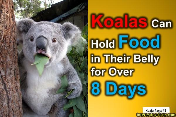 koalas on emaze