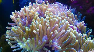 Clown Fish on emaze