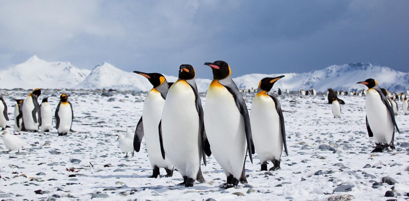 penguins birds that cannot fly essay