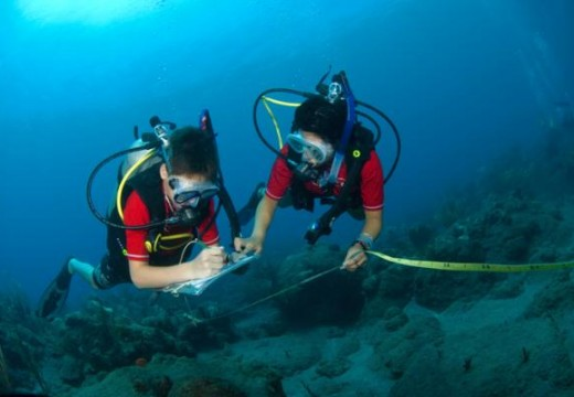 How much do marine biologists get paid?