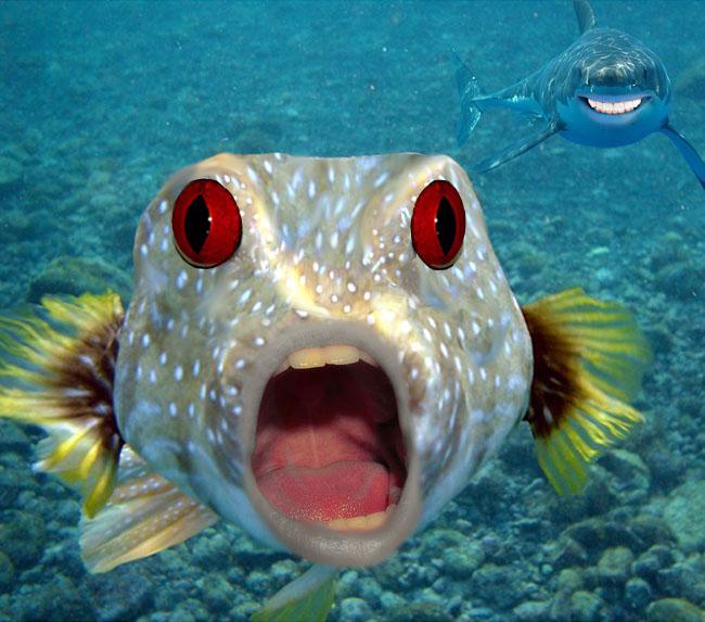 Рыбка картинки приколы