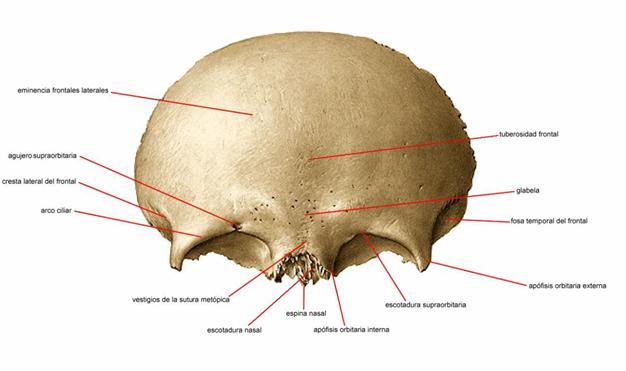 Huesos y articulaciones on emaze